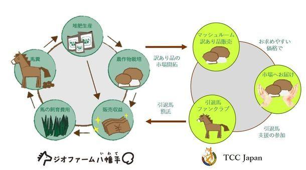 日本サラブレッドTCC JAPAN、馬ふん堆肥を活用した有機マッシュルームの提携販売に合意