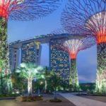 日本の菊「千輪咲」シンガポールの人気植物園『ガーデンズ・バイ・ザ・ベイ』に試験展示決定