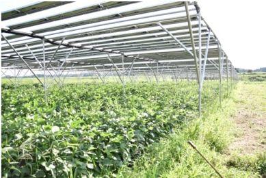ハウステンボス、地産地消・日本初の自家消費型ソーラーシェアリングとブルーベリー観光農園を開設