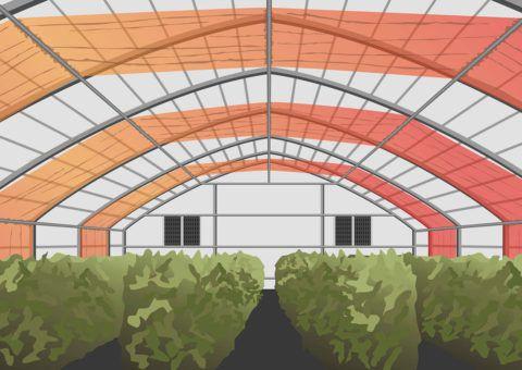 ナノテク素材ベンチャー、NASA研究予算にて宇宙空間におけるレタス栽培技術の開発へ