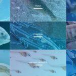 デンマークの「IT×水産養殖」複数企業がビッグデータを共有・AIによる研究開発へ