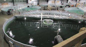 フロスト&サリバンによるASEANの水産養殖市場規模、2022年までに約350億ドルに拡大予測