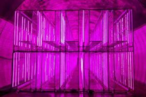 韓国にて地下トンネルを活用した世界最大級の植物工場が稼働