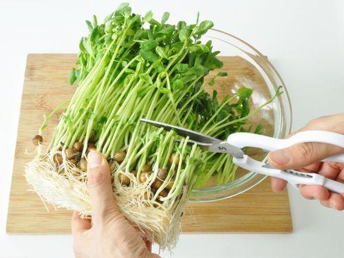 村上農園、包丁・まな板いらずの豆苗レシピコンテストを開催