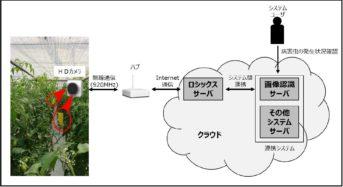 NTTドコモ、省電力HDワイヤレスカメラとAIを用いた病害虫の自動検出実証実験を開始