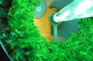 回転式・植物工場のGoto Gro社、オーストラリアの生鮮野菜の生産・卸売のFreshero社と合弁会社を設立