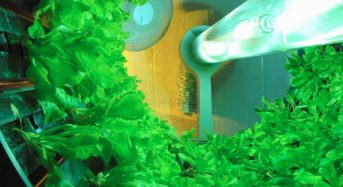 回転式・植物工場のGoto Gro社、オーストラリアの野菜生産・卸売と合弁会社を設立