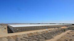 UAEアブダビの最新節水型のトマト植物工場、苗の定植スタート