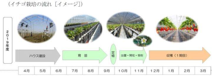 四国電力や銀座千疋屋など、生産~小売までが連携して「イチゴ・女峰」の生産法人を新設