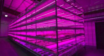 米国「Strong Vertical Gardens」家族経営による植物工場。着実に販路拡大・利益を確保