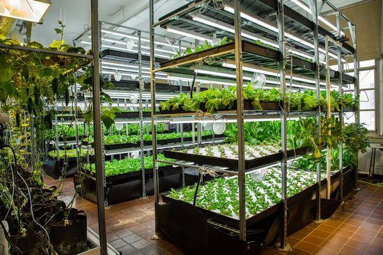 ニューヨーク市の学校が次々に植物工場を導入。子供達のフードデザート改善・地産地消を推進
