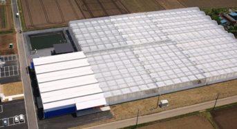 JFEエンジ、誠和トマトパークによる太陽光利用型植物工場の設計から建設一式までを受注