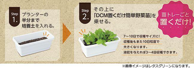 プランターに土を入れて苗を置くだけの簡単栽培「DCMブランド 置くだけ簡単野菜苗」新発売
