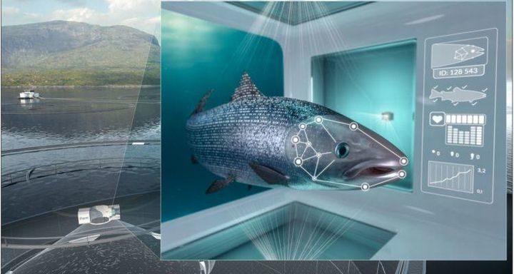 世界有数のサーモン養殖Cermaq社、魚の顔認証システムを導入。1匹ずつの健康状態をチェック