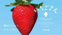 佐賀県、20年ぶりにイチゴ新品種「いちごさん」1万5,000の試験株から誕生