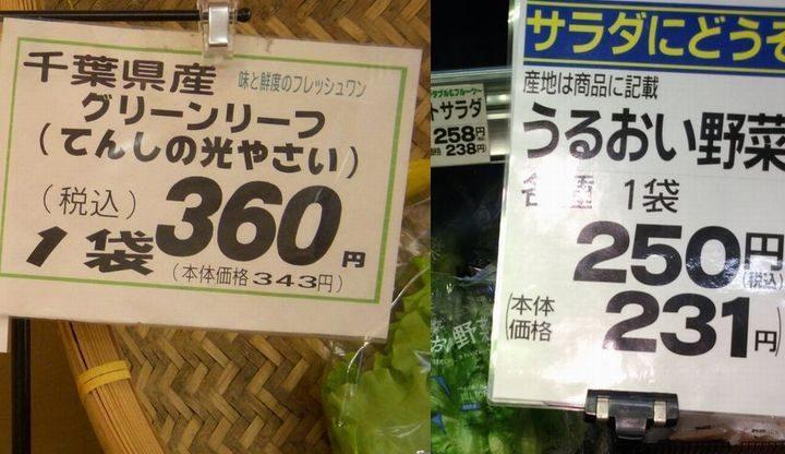 植物工場レタスの生産コスト、8年間で50%減。1株あたり100円前後へ