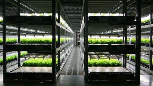 植物工場などのトレードグループ、持株会社制に移⾏。新たにアースサイドを設立