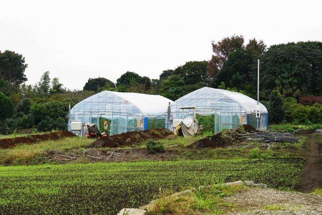 農業AIブレーン「e-kakashi」の実証実験を行うハウス農園「BASE」が横浜に誕生