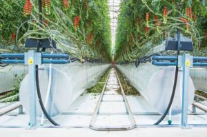 UAE植物工場のピュアハーベスト社、現地ファンドから約1.7億円を調達