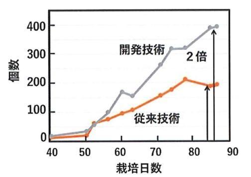 徳島文理大、トマトの収穫量を2倍にできるLEDライトを開発。植物工場にも導入可能