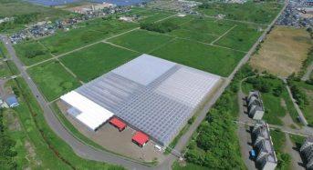 北海道サラダパプリカ、植物工場によるパプリカの出荷スタート