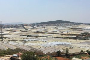 ベトナムFLCグループ、15億ドルをかけて農業再編へ。日本企業とも連携