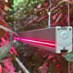 東大理学系研究科、夜間・曇天日のLED補光によるトマトの植物工場。生産性と品質向上に成功