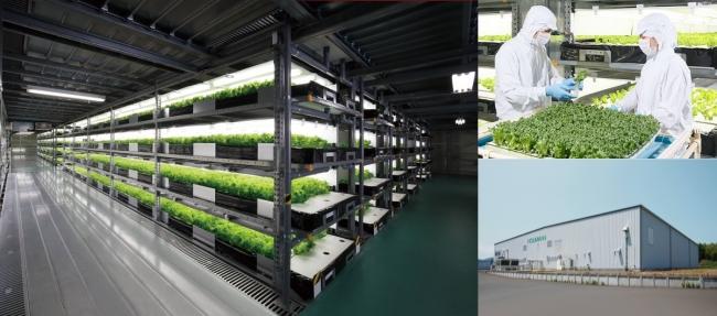 NOUMANN、結球「美い玉」レタスなどの植物工場野菜を「クックパッドマート」で販売開始