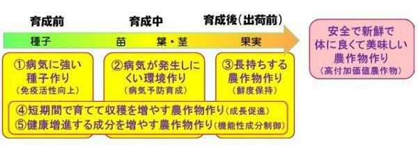 東北大、埼玉県越谷市とイチゴ栽培に関する共同研究。プラズマ照射による無農薬栽培の実現へ