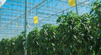 カナダ 植物工場市場『施設数 878カ所&栽培面積 1,562ha』都市部近郊の小型施設が増加