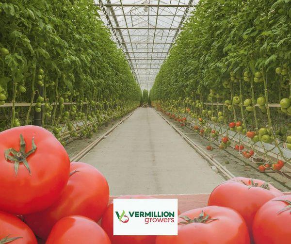 カナダ 植物工場市場『施設数 878カ所&栽培面積 1,562ha』