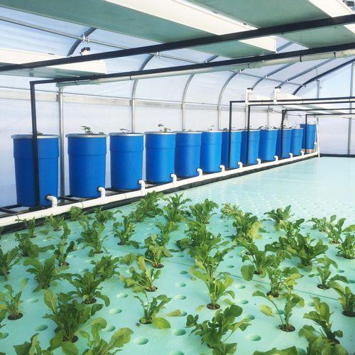 おうち菜園など、世界初のコンテナ型完全オフグリッドのアクアポニックス農場を開発
