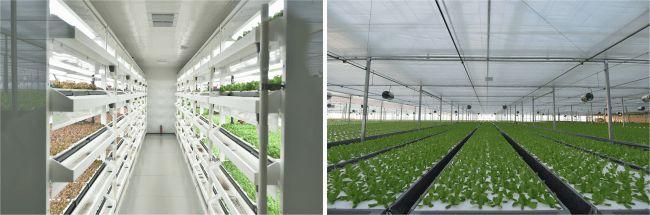 三菱ケミカル、京東集団に納入した中国最大級の植物工場が北京市に完成