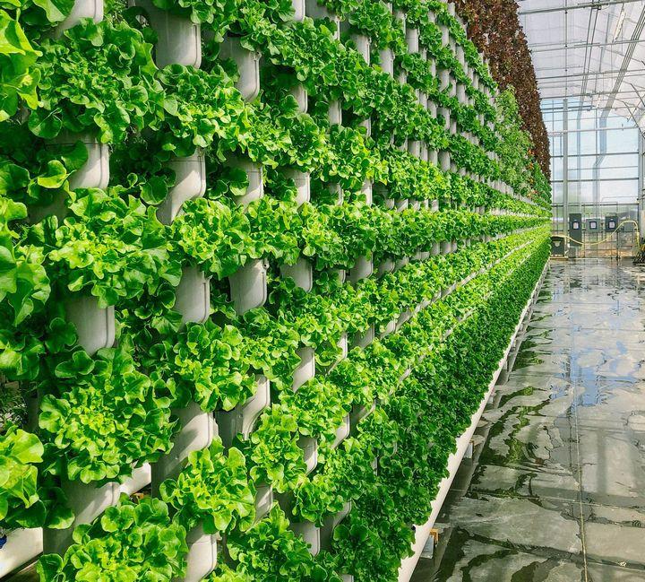 大統領のトランプ・ジュニアも、タワー型植物工場ベンチャーへ投資