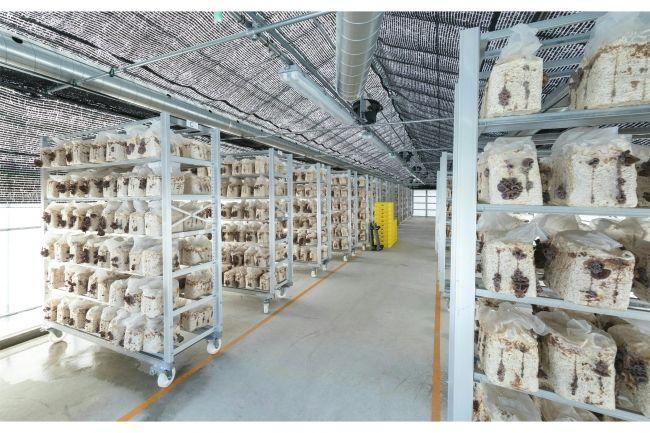 シイタケ・キクラゲ生産の「伯耆のきのこ」動画ショッピングサイトにてスキンケア商品を販売