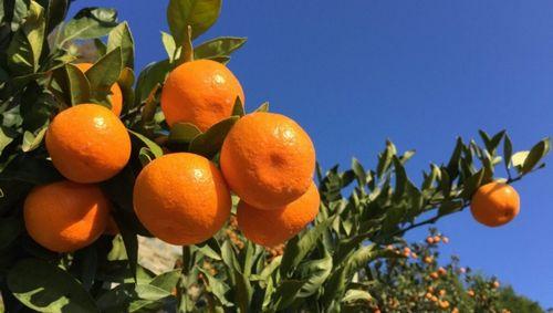 宿泊機能を持ったコワーキングスペース「コダテル」が柑橘農家の人手不足を解消