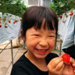 三共木工、太陽光利用型の植物工場による体験型イチゴ狩り施設をオープン