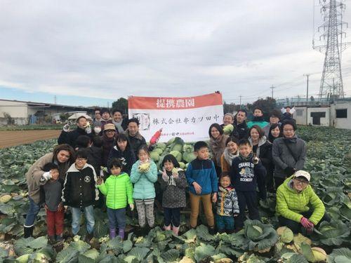 カツ田中、有機廃棄物をたい肥化へ。キャベツ・リサイクルにて約300株を収穫