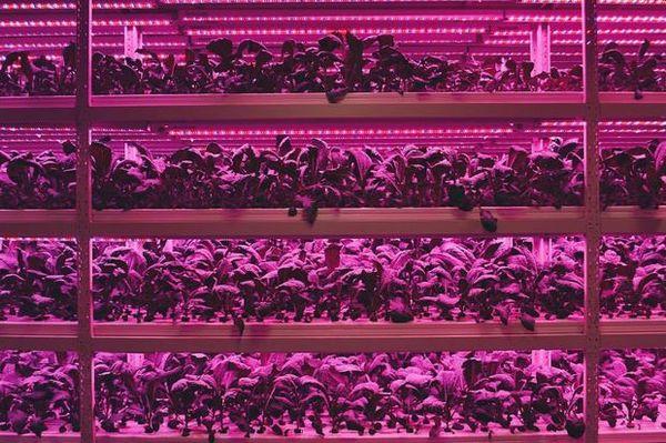 シンガポール共和理工学院、植物工場などハイテク農業人材を育成する専門コースを開設