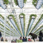 淡路の島菜園によるイチゴ狩り施設。栽培棚が上下可能な空飛ぶいちごハウス