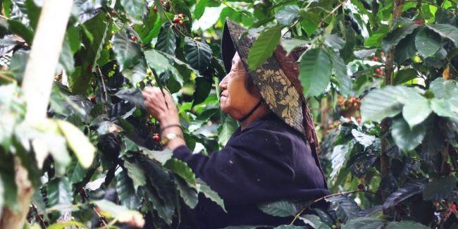 坂ノ途中、Dari Kとのコラボチョコレートを限定販売。東南アジアのコーヒー産地の発展へ