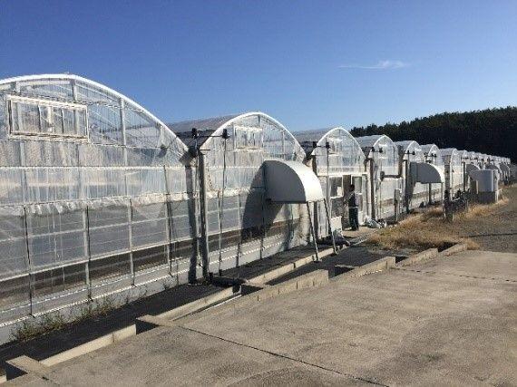 いちご株式会社、宮崎にて大型スマートハウスを取得。栽培施設の賃貸借事業へ