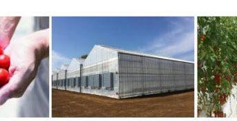 阪急阪神HD、植物工場による高糖度ミニトマトの生産へ