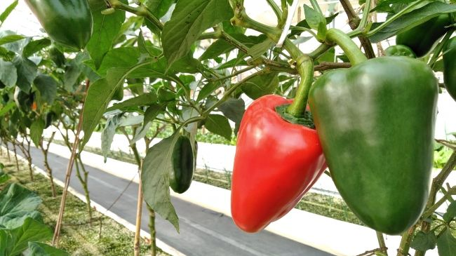 賃貸仲介のハウスコム、障がい者雇用型の温室ハウス農園「ハウスコムファーム」を公開