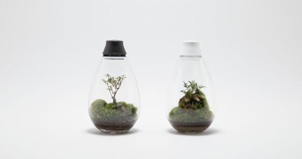 Green's Green × BEAMS こけ玉や盆栽などのグリーンインテリアを提案