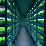 先行・失敗事例から学ぶ米国の植物工場ベンチャー。来春から業務用シェフをターゲットに野菜を販売