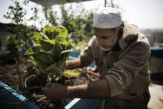 パキスタン農業研究協議会、庭や屋上スペースを活用した都市型の有機栽培プログラムを開始