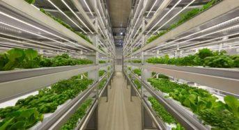 ロシアの植物工場ベンチャー、欧州市場への事業展開のため100万ドルの資金調達へ