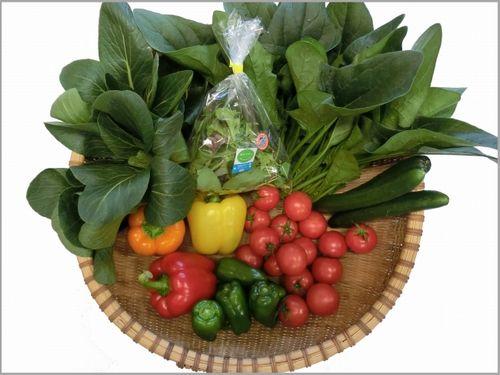 日本トリム、電解水素水による機能性野菜を限定販売