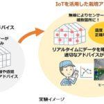 NTTテクノクロスとタキイ種苗、IoTを活用したトマト栽培のスマート農業化へ